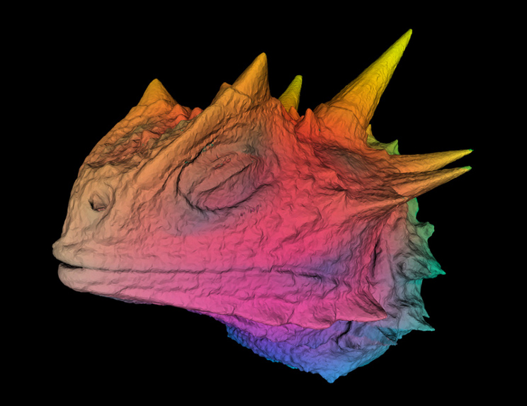 Texas Horned Lizard color from CAT scan x-ray